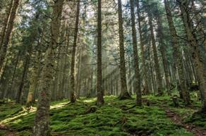 Duurzaamheid van houtsoorten